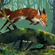 FedSample_fox